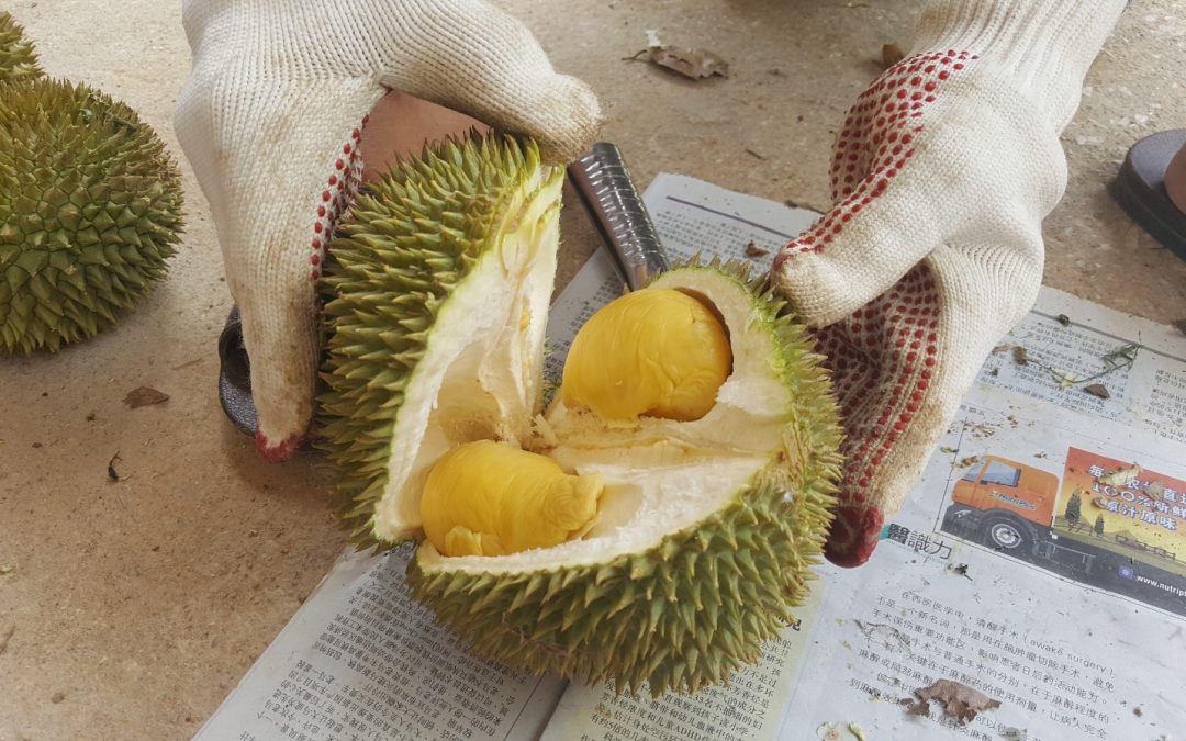 Why Must You Eat Durian At-Least-Once?